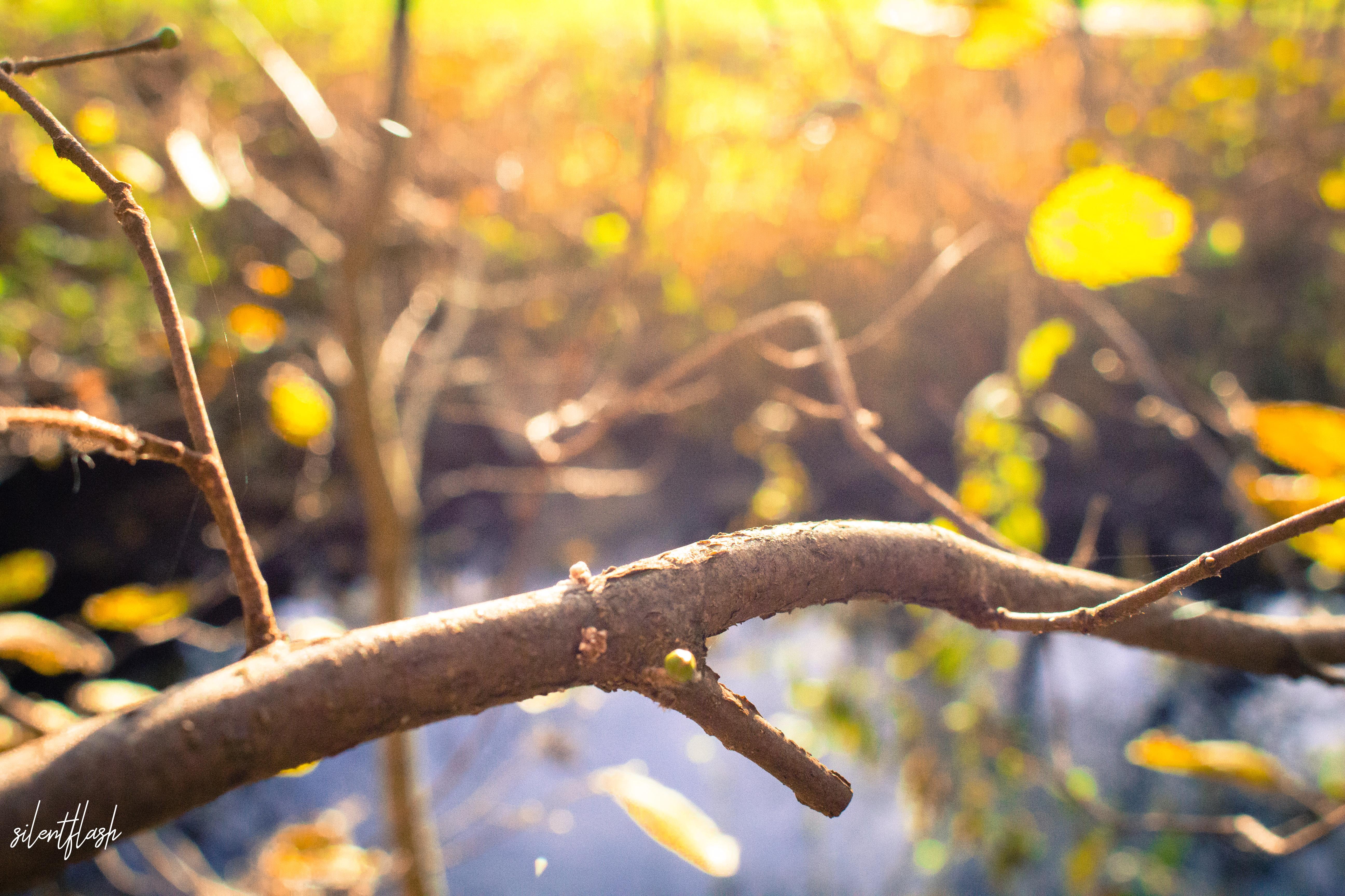 Äste, Blätter und Sonnenschein