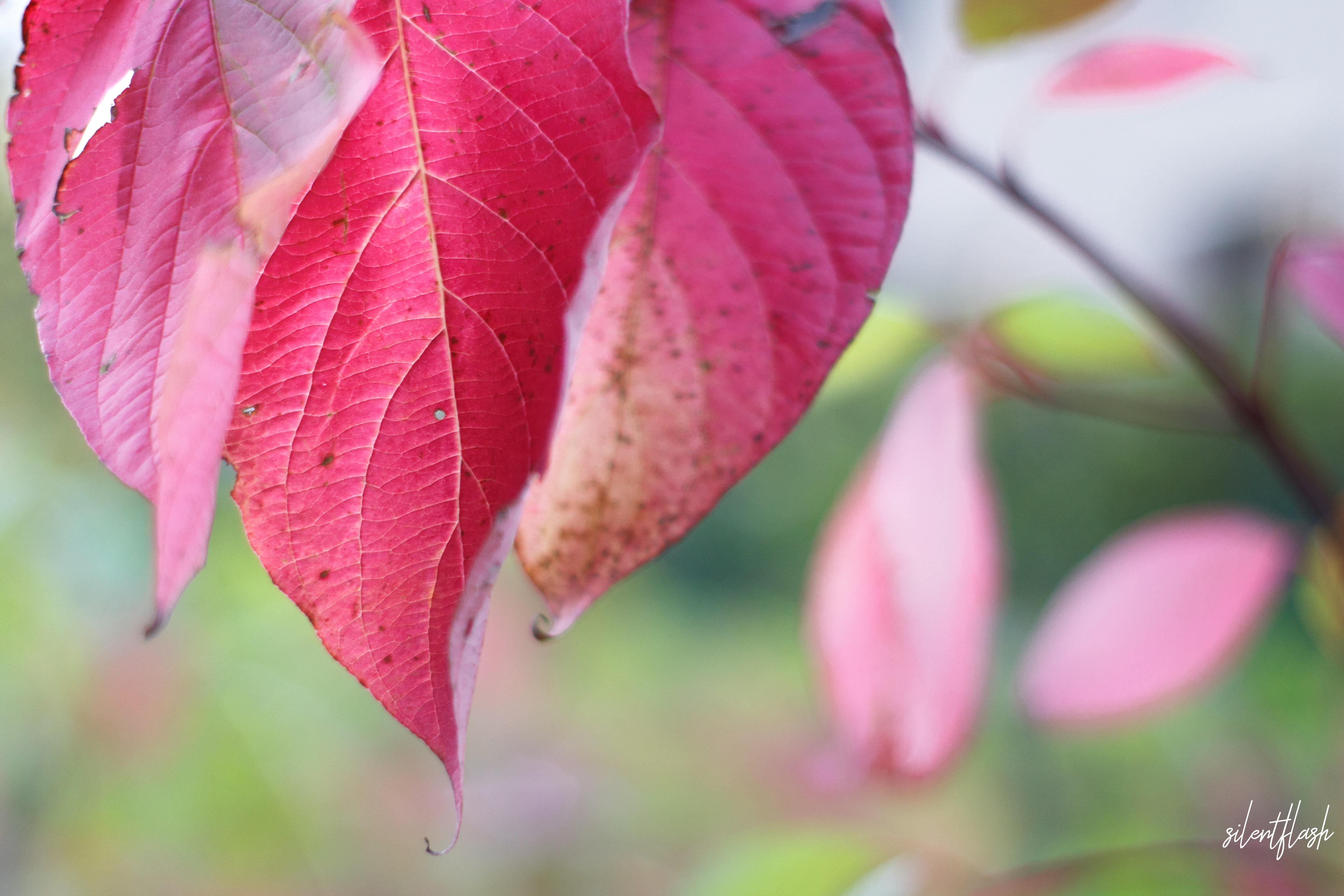 Farben im Herbst