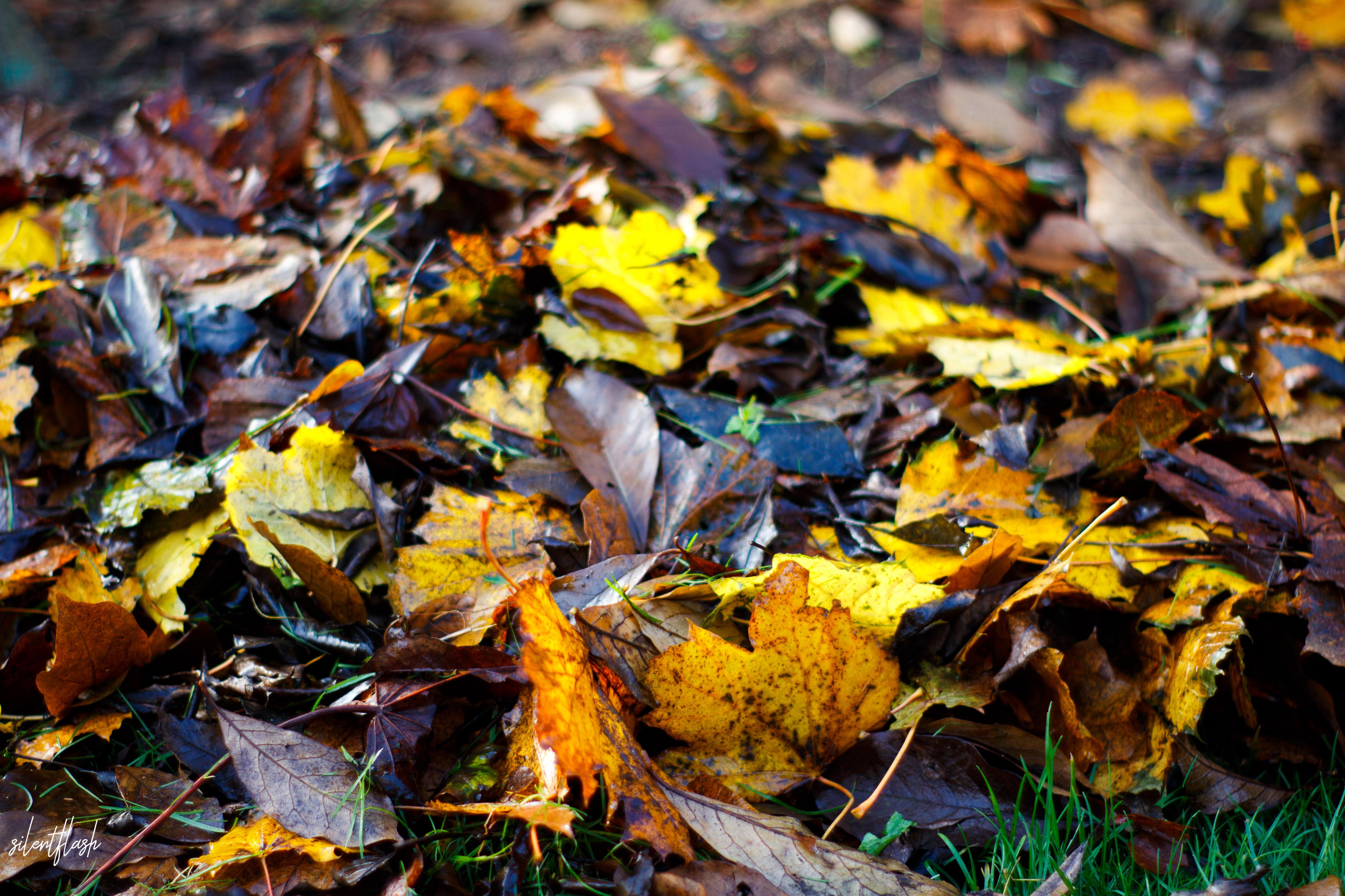 Ein Blätterhaufen